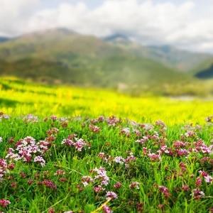 산과 들과 꽃과 피